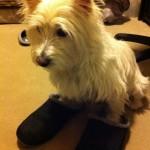 Beau in slippers