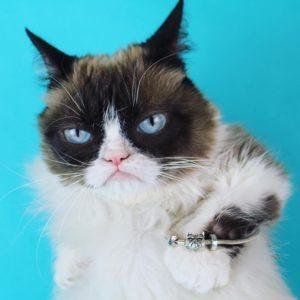 ohm-beads-grumpy-cat-cover2